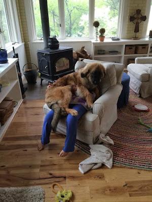 Perro enorme