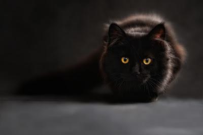 sedekah pada kucing sedekah untuk kucing berkat sedekah pada kucing keajaiban sedekah pada kucing sedekah pada seekor kucing kisah sedekah pada kucing sedekah makanan pada kucing sedekah kucing sedekah kucing makan sedekah buat kucing sedekah dengan kucing sedekah kepada kucing sedekah makanan kucing sedekah pada kucing sedekah sama kucing sedekah terhadap kucing berkat sedekah kepada kucing