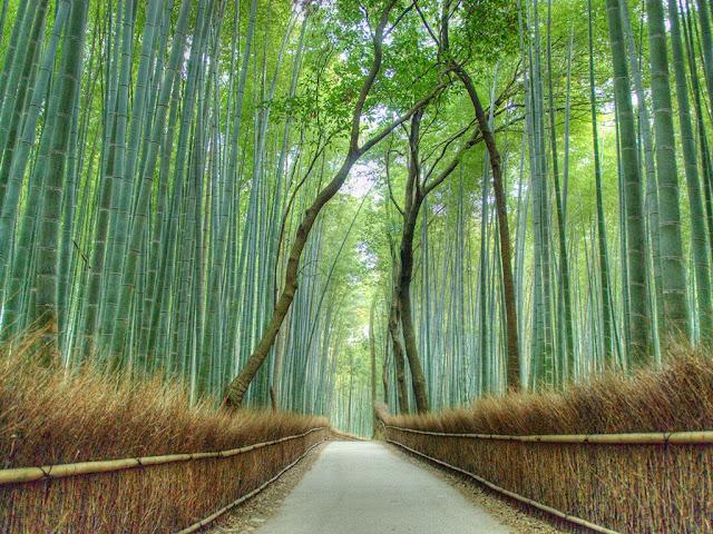 Arashiyama- Kyoto-Japan