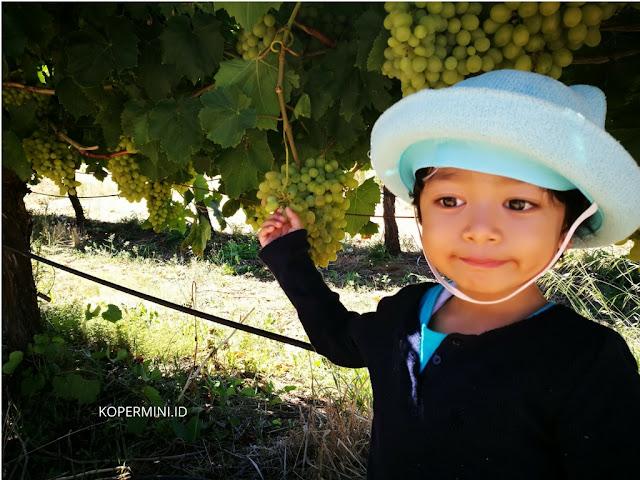 Kawasan anggur tertua di Australia