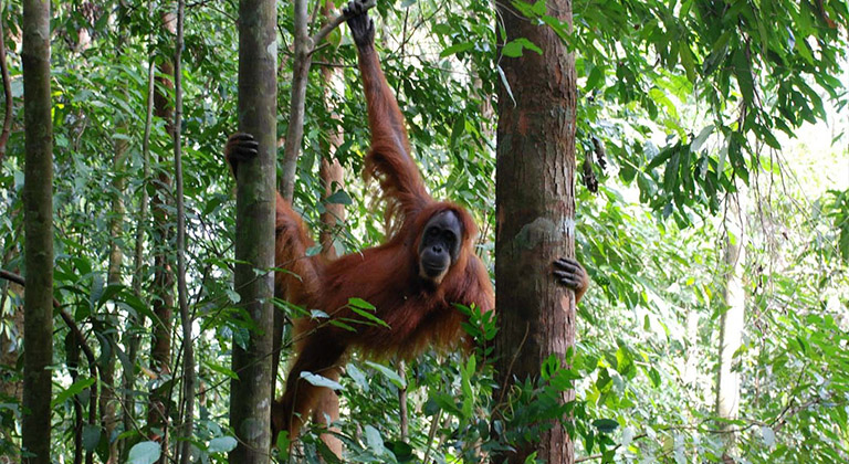 Tropical Rainforest Heritage of Sumatra, Asia Heritage Sites Attractions