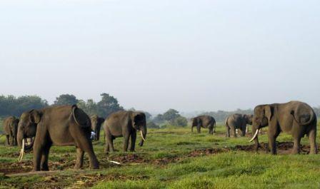 Permalink ke Keseruan Wisata Taman Nasional Way Kambas Lampung