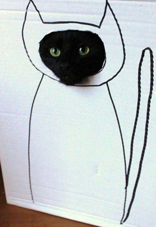 carton et chat 27