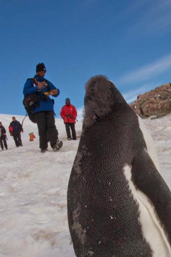 "They can be easily identified by the white ""bonnet"" that goes across their head… - He Was Taking Photos Of A Glacier In Antarctica When Suddenly, Out Of Nowhere… WHOA!"