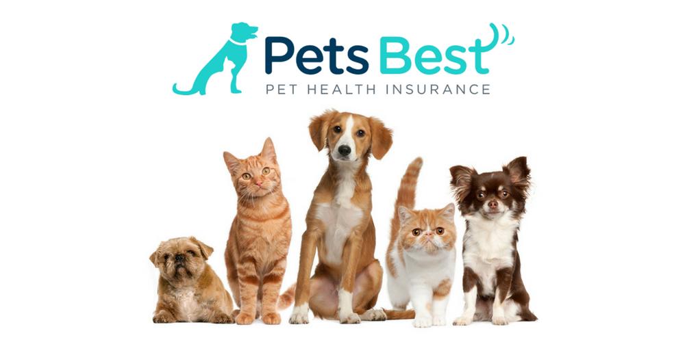Pet insurance worldwide