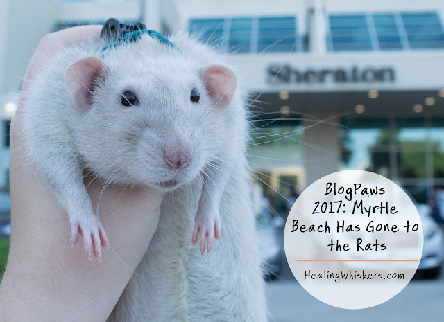BlogPaws 2017: Myrtle Beach Has Gone to the Rats