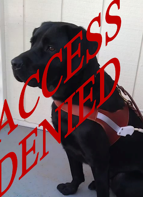 "A black labrador in full guide dog harness sits against a white wall. Red letters across the image spell out the words ""Access Denied"""