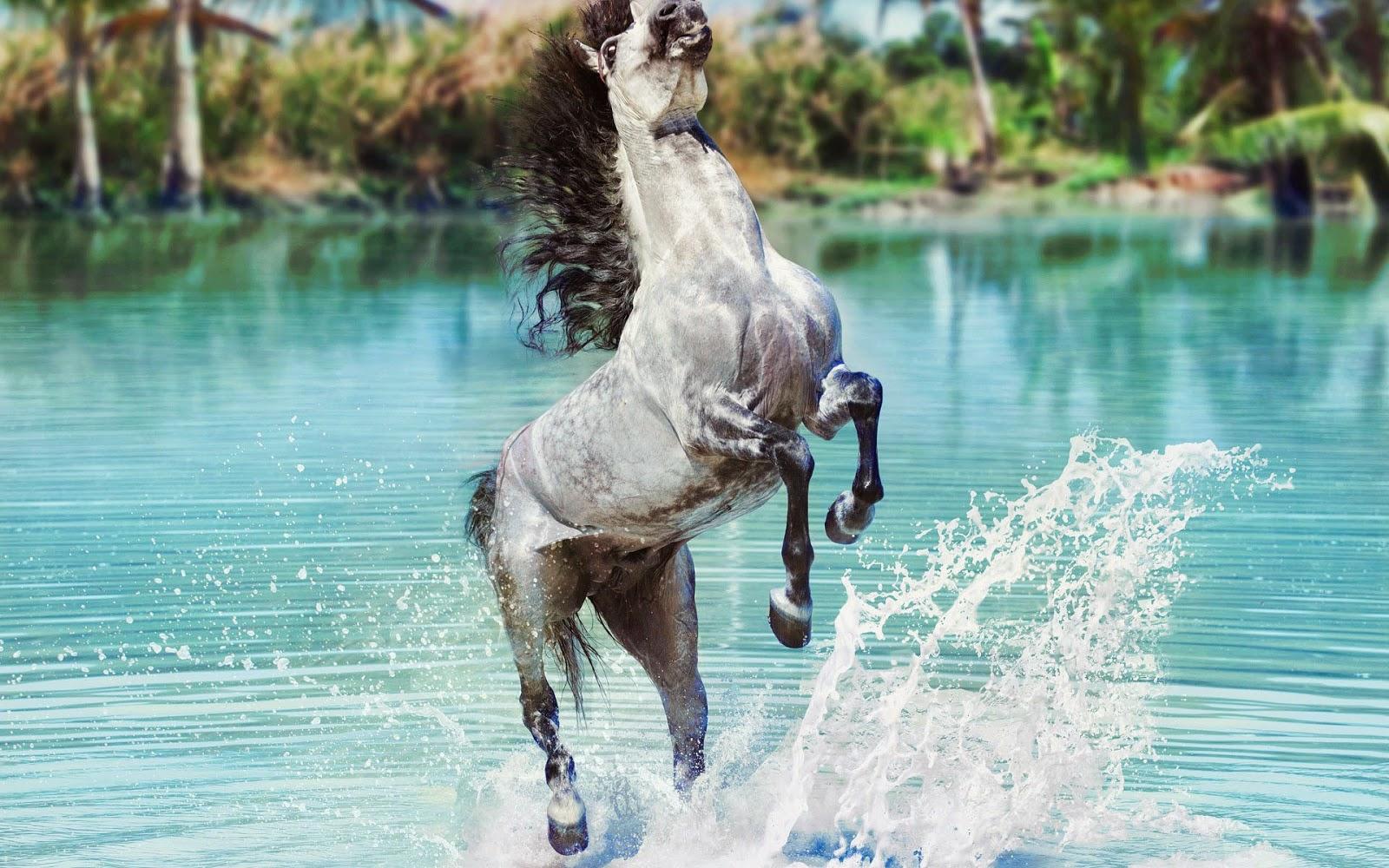 Steigerend grijs paard in het water