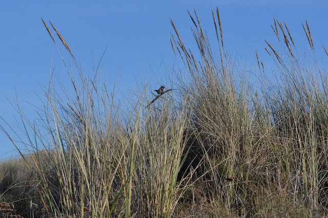 small bird in the grass
