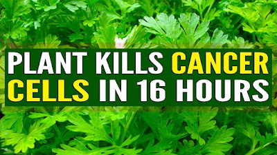 This Plant Kills Cancer Cells In 16 Hours