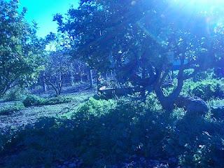 Bosques comestibles en españa