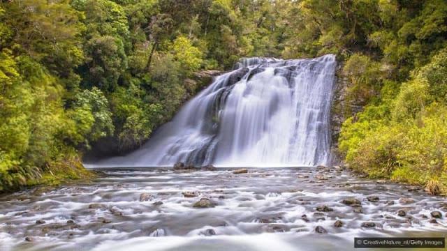 Khu rừng thiêng cô độc của New Zealand