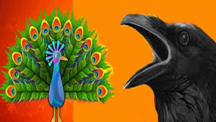 Il corvo, il cigno il pappagallo e il pavone - anonimo
