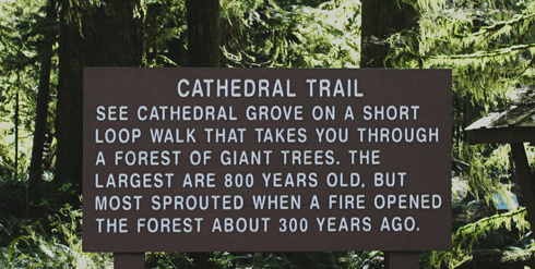 Cathedral Grove Vancouver Island BC