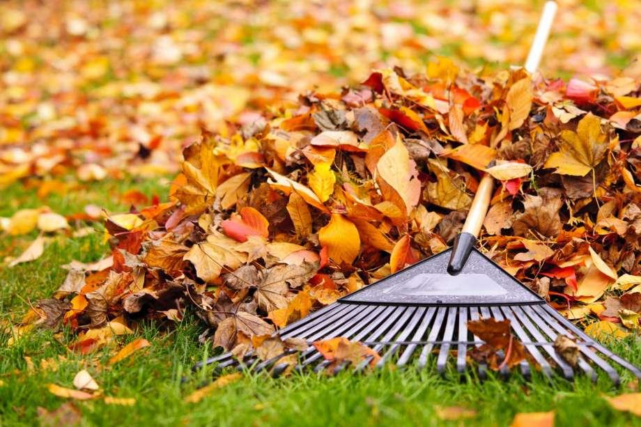 The Autumn Leaves ..... - Page 9 Rakingautumnleaves