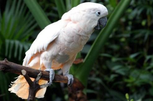 Harga Terbaru Burung Kakatua 2017 Saka Doci