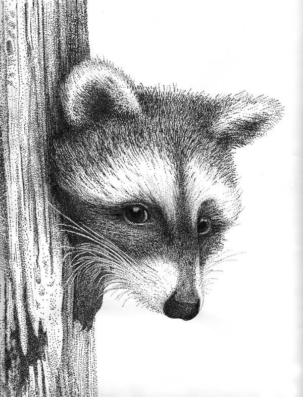 04-Raccoon-Rens-Ink-Animal-Wildlife-Pen-and-Ink-Stippling-Drawings