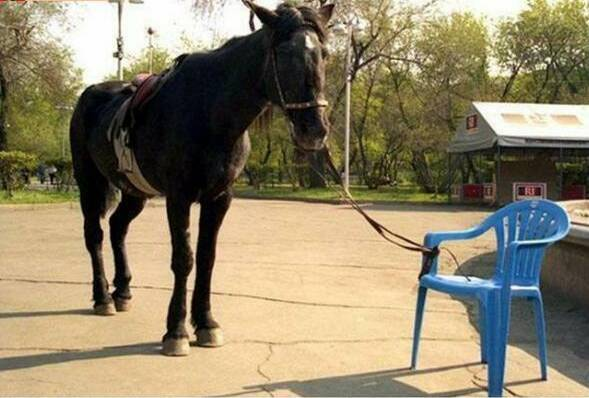 photo cheval attache a une chaise
