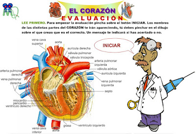 http://www.eltanquematematico.es/corazon/evaluacion/evalcora_p.html