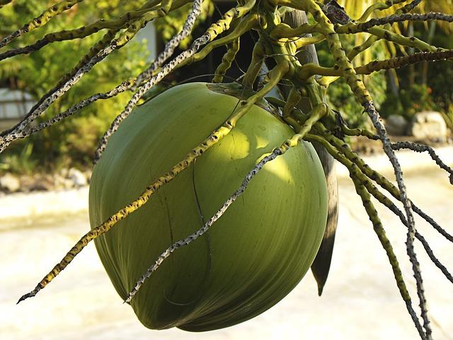 aceite de coco propiedades y beneficios