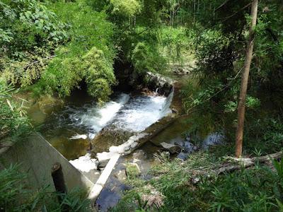 府民の森 ほしだ園地 天野川