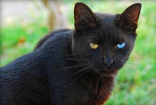 Mitos kucing memiliki 9 nyawa yang beredar di masyarakat