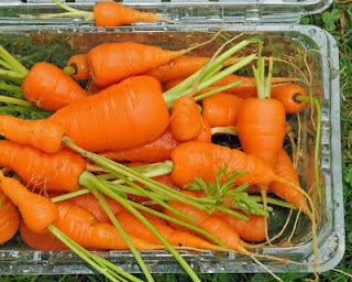 baby carrots from Flickr vibrant_art