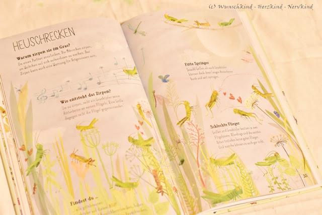 Montessori-inspirierte Kinder-Sachbücher über das Thema Insekten. Die Faszination Insekten in Kinderbüchern. Alles über Marienkäfer, Libellen, Stechmücken, Würmer, Ameisen und viele mehr.