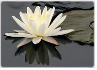 thai massage østjylland massageklinik århus