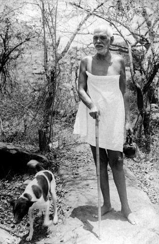 """Résultat de recherche d'images pour """"ramana chien"""""""