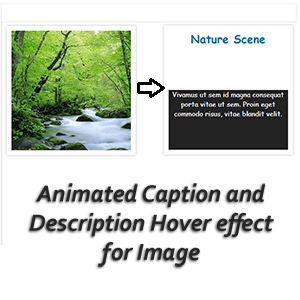 Animated-Caption-and-description-Hover-effect