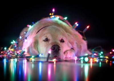 chien illuminé