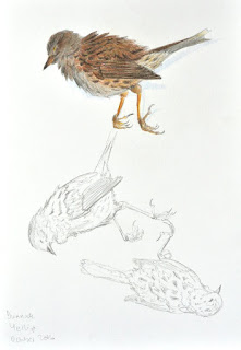 Dunnock post-mortem study