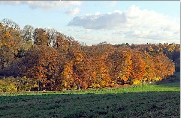 Autumn Tree Line