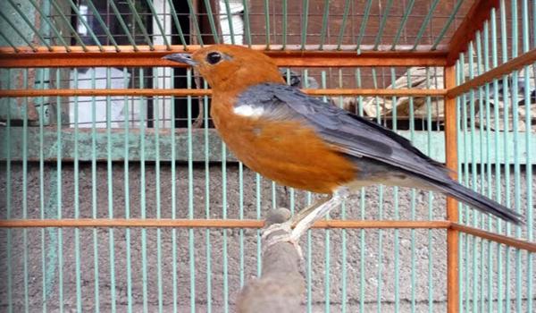 terapi burung stress