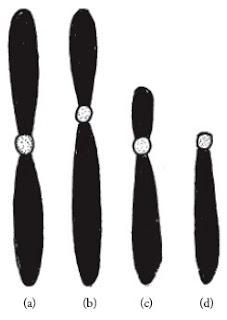 Bentuk-kromosom