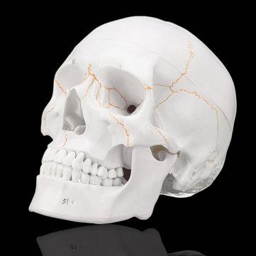 Kafatası Kemikleri ve Anatomisi