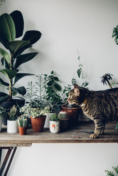 green plants with cat