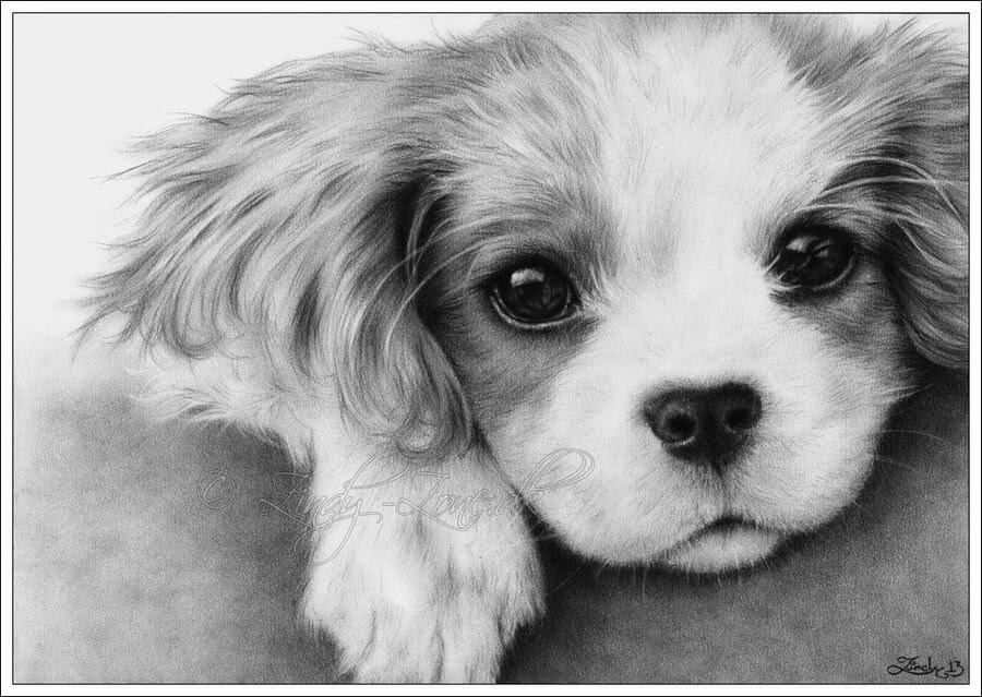 02-Spaniel-Zindy-Nielsen-Fantasy-Animals-Meet-Realistic-Ones-www-designstack-co