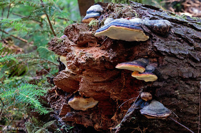 Bracket Fungus Colony
