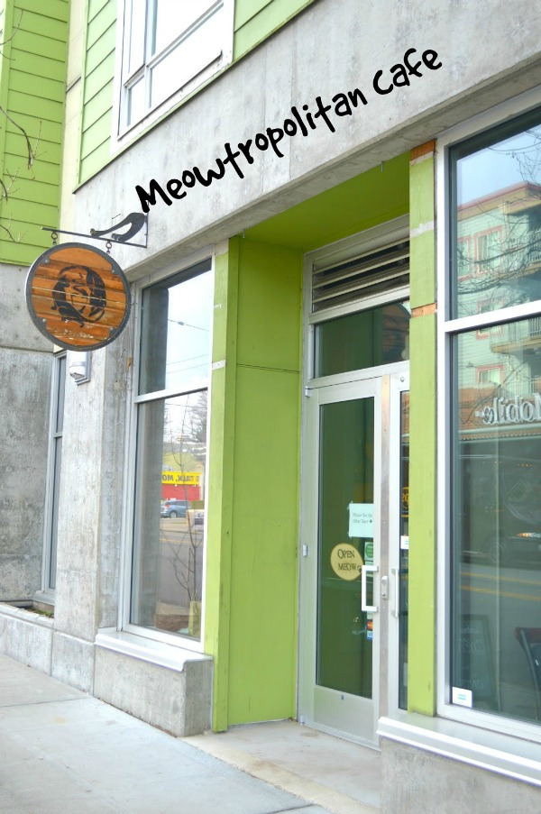 meowtropolitan seattle cat café