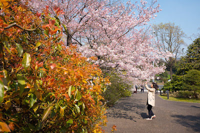 Visitor photographing National Theatre Tokyo sakura