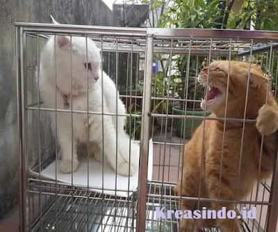 Jasa Kandang Kucing Stainless Jakarta dan sekitarnya Harga Murah