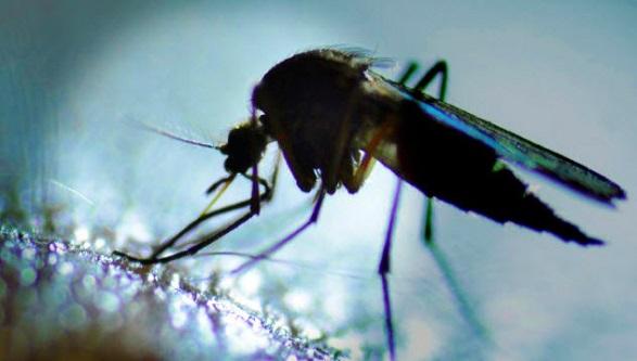 Sivrisinekler Geceleri Seni Daha İyi Koklar