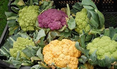 Manfaat sayur kol untuk kesehatan