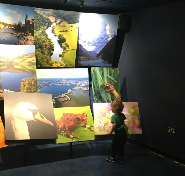 National-Museum-Cardiff-a-toddler-looking-at-lit-posters-of-animal-and-scenery
