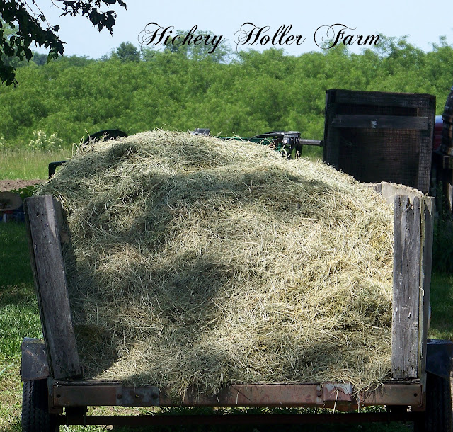 Tilling Backyard: Hickery Holler Farm: No Till Gardening And Heavy Mulch