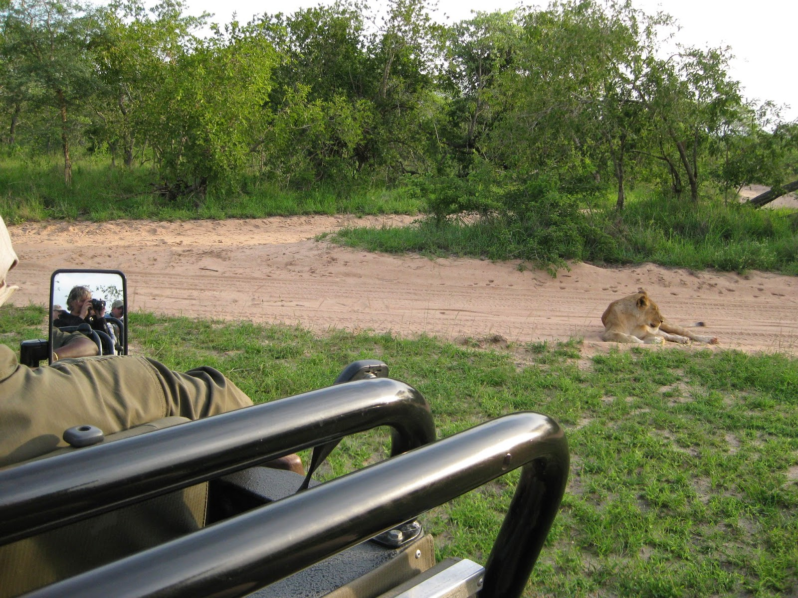 Sabi Sands - This is how close we can get to the animals