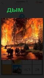 появление дыма в лесу