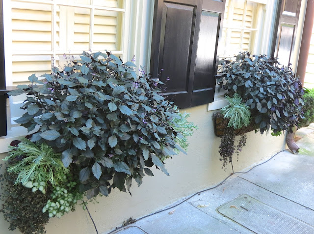 top charleston window boxes gardens